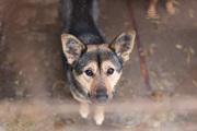 Ищу спонсора для постройки приюта для бездомных животных!